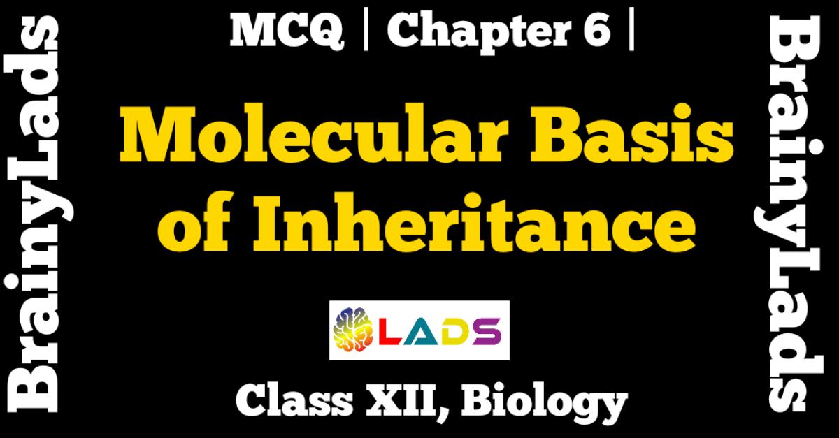 MCQ Of Molecular basis of Inheritance